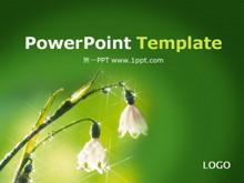 绿色植物鲜花背景PPT模板下载