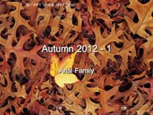 秋天的落叶PPT背景图片