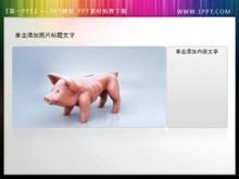 小猪存钱罐PPT小插图