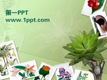 植物相册PPT模板下载