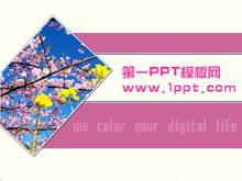粉色桃花背景PPT模板下载