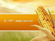 �S收的喜��玉米背景PPT模板