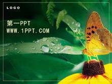 精美蝴蝶花朵PPT模板下载