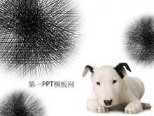 可爱的斑点狗背景PPT模板下载