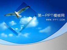 飞翔的海鸥背景PPT模板下载