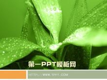 �G色植物背景PPT模板下�d