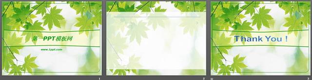 關鍵詞:楓葉ppt背景圖片,綠色ppt背景,植物類ppt模板下載,ppt格式