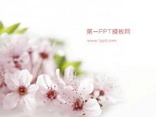 粉色桃花背景植物�幻�羝�模板下�d