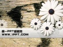 菊花木板背景PPT模板下�d