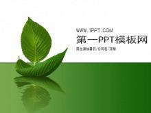 简洁树叶背景植物PPT模板下载