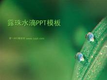 叶子上的露珠背景植物幻灯片模板下载
