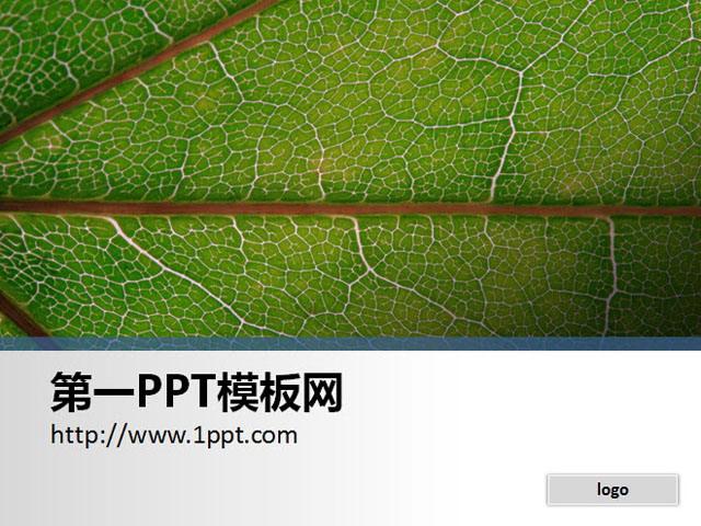 一张简洁的树叶特写PPT背景图片