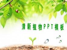 清新的树叶背景平安彩票官网下载
