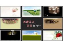 《蔷薇花开需要等待》PPT动画下载