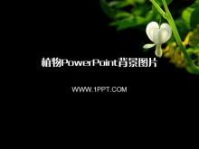二十二张黑色植物PowerPoint背景图片
