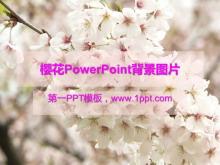 樱花PowerPoint背景图片免费下载