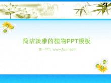 淡雅菊花背景植物PPT模板下�d
