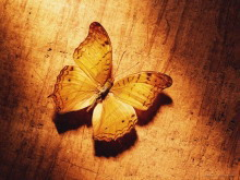 木板上的枯蝶PPT背景�D片