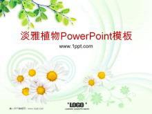淡雅菊花茶树背景植物PowerPoint模板下载