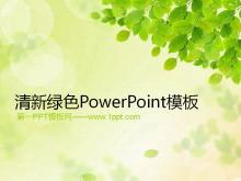 清新绿色树叶子背景的环境保护幻灯片模板