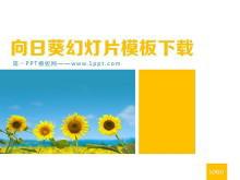向日葵背景的植物PowerPoint中国嘻哈tt娱乐平台tt娱乐官网平台