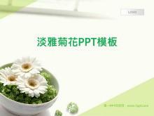 清新淡雅的菊花背景植物幻灯片模板下载