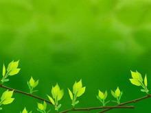 绿色清新的叶子PowerPoint背景图片下载