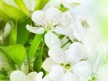 三张淡雅绿色鲜花PowerPoint背景图片下载