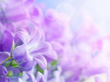 一组紫色鲜花幻灯片背景图片下载