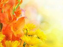 橙色温馨鲜花幻灯片背景图片下载