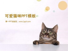 可爱猫咪幻灯片模板下载