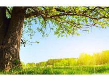 和煦阳光下的大树幻灯片背景图片