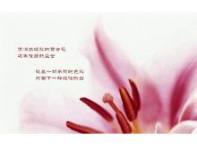 一组鲜花花卉幻灯片背景图片