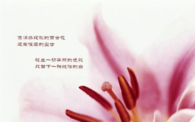 鲜花,花朵,花卉,郁金香,百合幻灯片背景图片,植物powerpoint背景模板