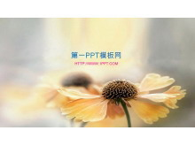 淡雅背景的阳光下的花朵幻灯片背景图片