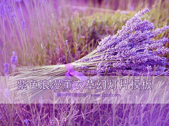 紫色浪漫薰衣草背景植物幻灯片模板下载