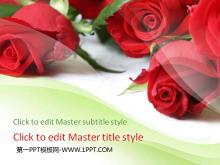 鲜艳玫瑰背景的爱情幻灯片模板下载