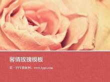 粉色烂漫玫瑰花背景的植物m88