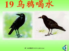 《乌鸦喝水》PPT课件3