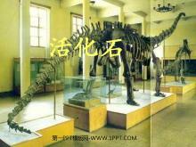 《活化石》PPT教学课件tt娱乐官网平台2
