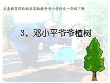 《邓小平爷爷植树》PPT课件2