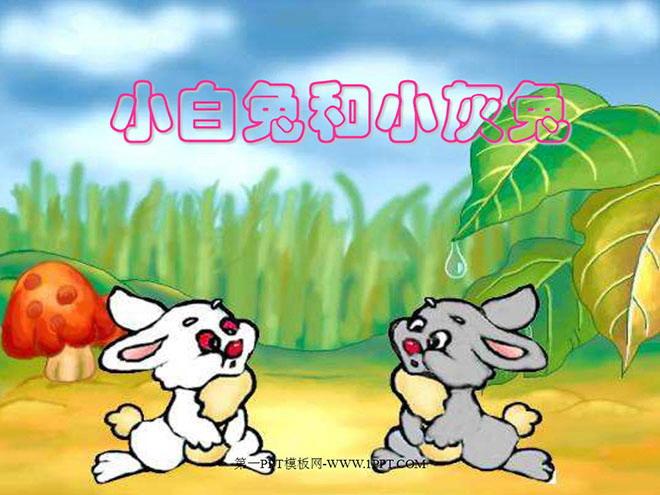 小白兔和小灰兔PPT课件下载