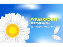 清爽淡雅的野菊花背景PPT模板