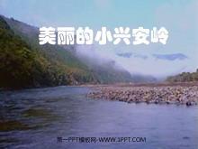 《美丽的小兴安岭》PPT教学课件下载
