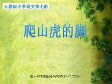 《爬山虎的脚》PPT教学课件下载4