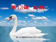 《白鹅》PPT课件下载
