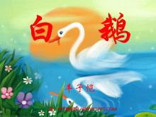 《白鹅》PPT课件下载2