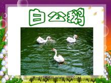 《白公鹅》PPT课件下载3
