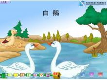 《白鹅》Flash动画课件