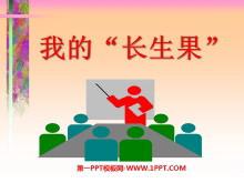 """《我的""""长生果""""》PPT课件下载"""